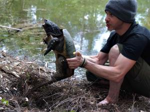 wild-things-dominic-monaghan-florida-snapping-turtle.jpg.rend.tccom.1280.960